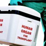 Основные особенности аллогенной и аутогенной трансплантации при онкологии
