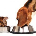 Сухие кормы для собак и щенков