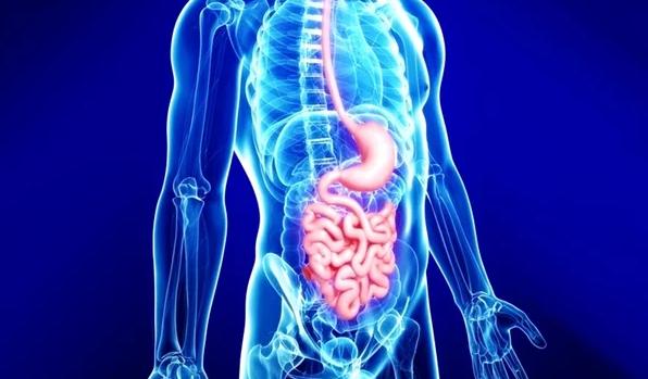 Как предупредить заболевания желудочно-кишечного тракта